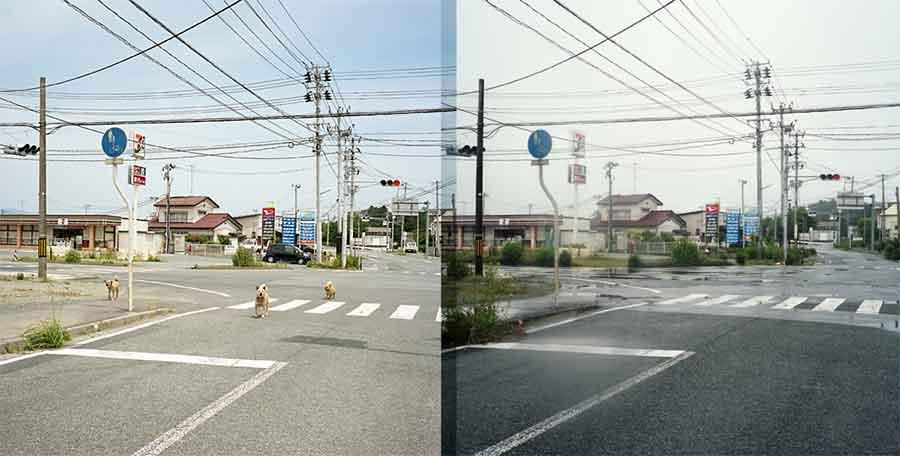"""""""Abandoned Dogs"""", Toshiya Watanabe"""